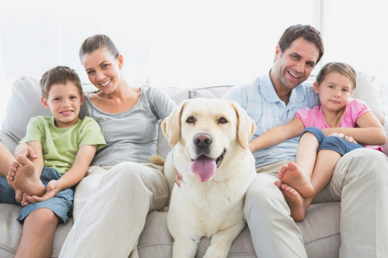 Happy family sitting on couch with their pet labrador at ...
