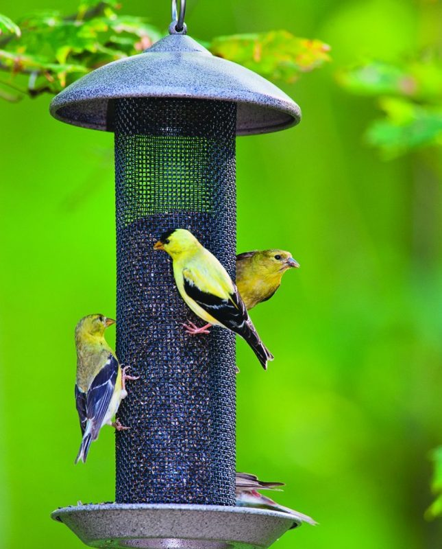 How to attract birds to your yard | Royal Examiner